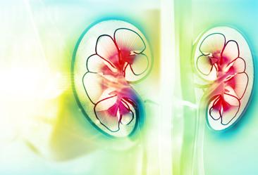 Akutes Nierenversagen
